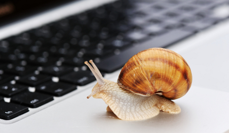 Snail on laptop