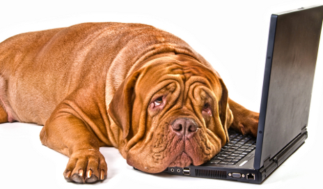 Dog depressed on laptop
