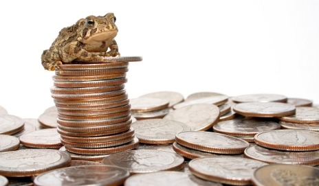 Frog on a pile of coins