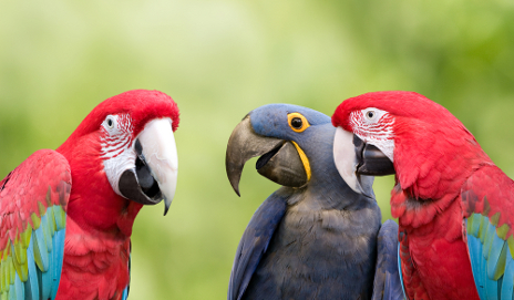Chattering parrots