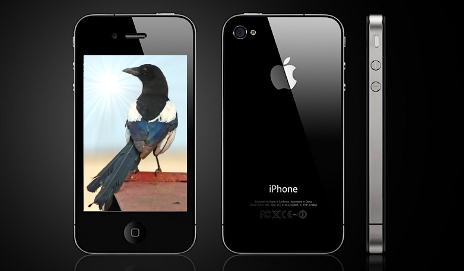 Magpie on iPhone 4