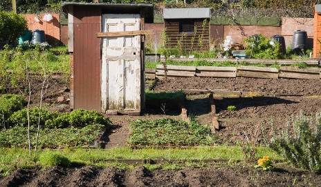 A homemade shed on an allotment