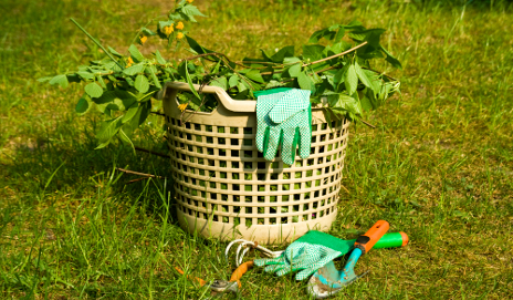 Garden waste in basket