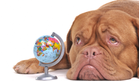 Sad dog with globe