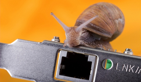 Little snail on lan card with orange background