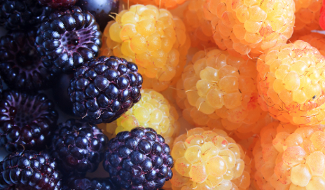 Yellow raspberries and blackberries