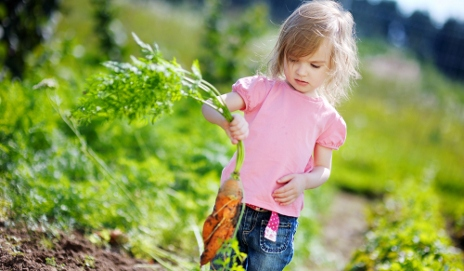 Girl pulling up a carrot