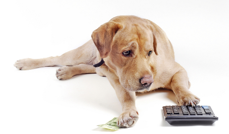 Labrador with calculator and money