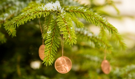 How much would you pay for a Christmas tree?