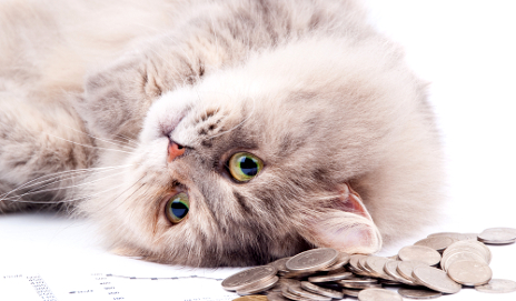 Cat lying next to lots of money