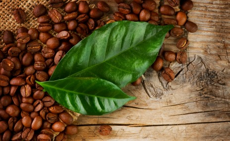 Can you use used coffee grounds as a fertiliser for your - Are coffee grounds good for your garden ...