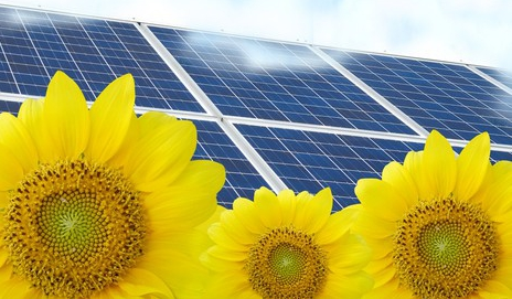 Solar panels and sunflowers