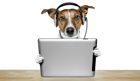 Dog using a tablet