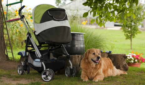 Dog guarding a pushchair in a garden