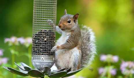 Can you stop squirrels from stealing your bird feed - How do you keep squirrels out of your garden ...