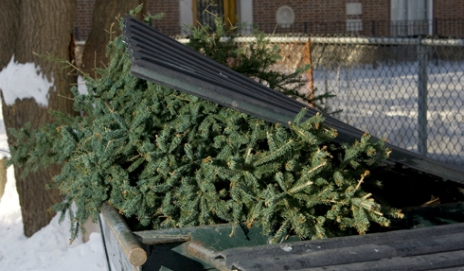What's the best way to dispose of your real Christmas tree?