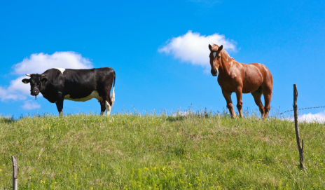 A cow and horse in a field