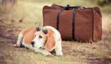 A dog with sunglasses and a suitcase