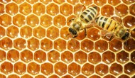 Two bees on a honeycomb