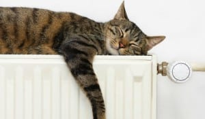 cosy cat on radiator