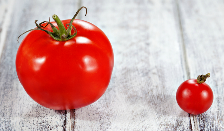 Big and small tomatoes
