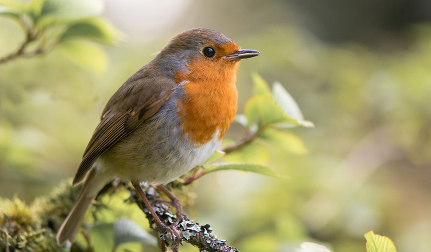Do you try to attract wildlife to your garden?